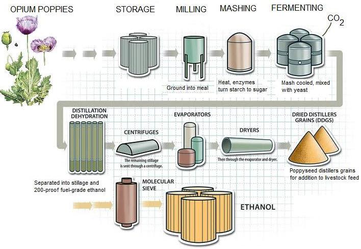 La filière éthanol bio en France
